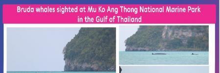 Bruda whales sighted at Mu Ko Ang Thong National Marine Park in the Gulf of Thailand